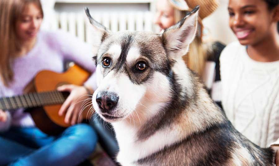 how to find pet friendly apartments paris