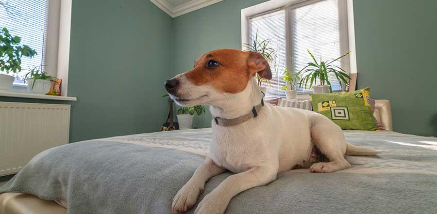 furnished apartments pet rentals boston ma