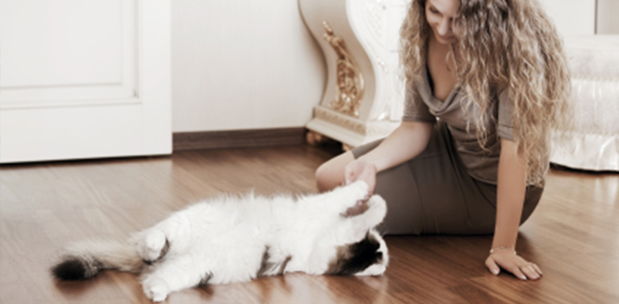 relocation moving pet friendly apartment homes